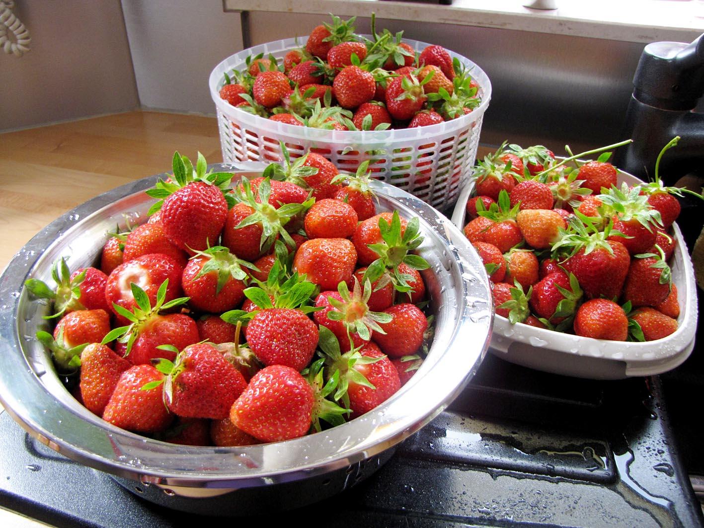 erdbeeren im topf erdbeeren im topf so gedeihen sie am. Black Bedroom Furniture Sets. Home Design Ideas